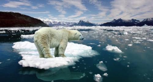 el oso polar en peligro de extinción 2