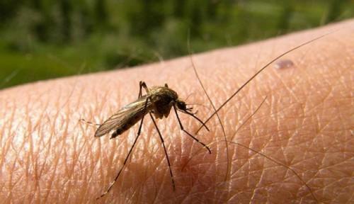 información sobre el dengue 2