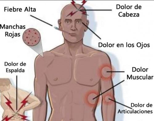 información sobre el dengue 3