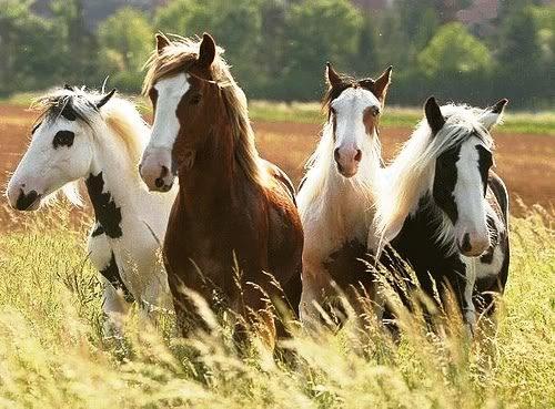 información sobre el caballo 1