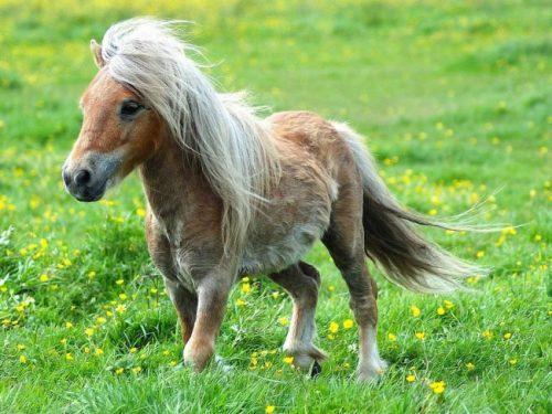 información sobre el caballo 4