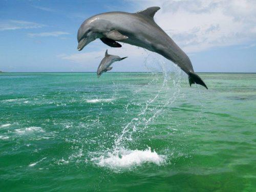 información sobre el delfín 2