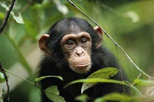 información sobre el mono 1