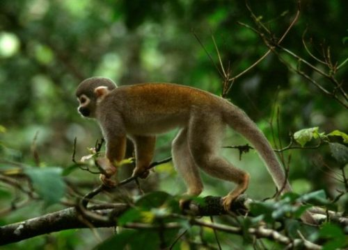 información sobre el mono 2