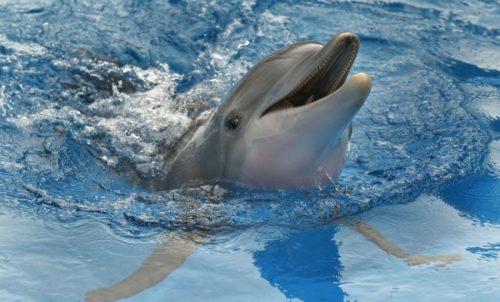 El delfín 1