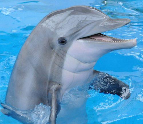 El delfín 2