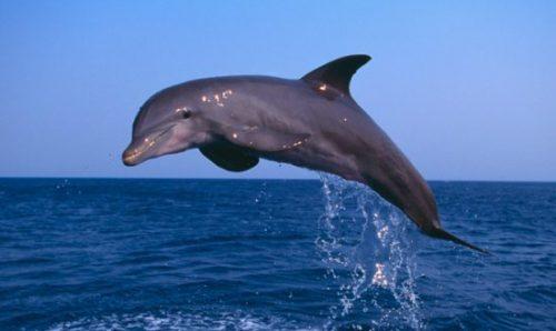 El delfín 3