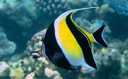 Los 10 peces más bellos 8