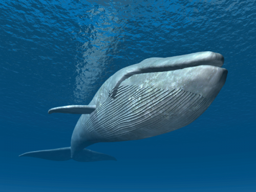 Los animales acuaticos 2