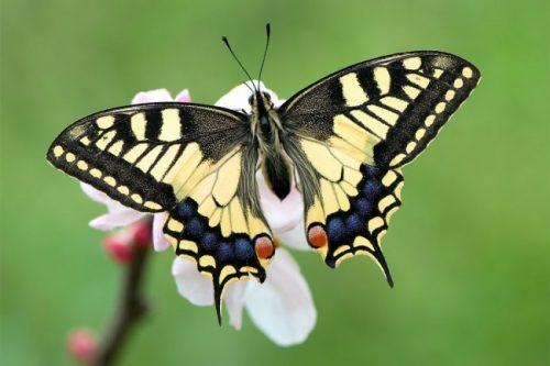 Todo sobre las mariposas 2