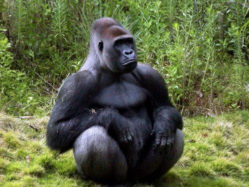 animales de la selva 3
