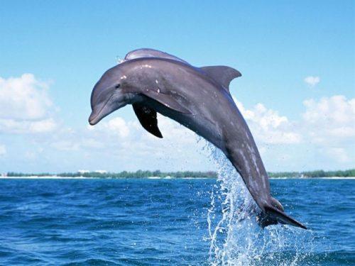 todo sobre el delfín 1