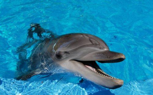 todo sobre el delfín 2