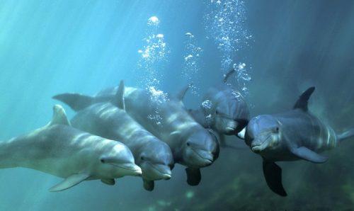 todo sobre el delfín 3